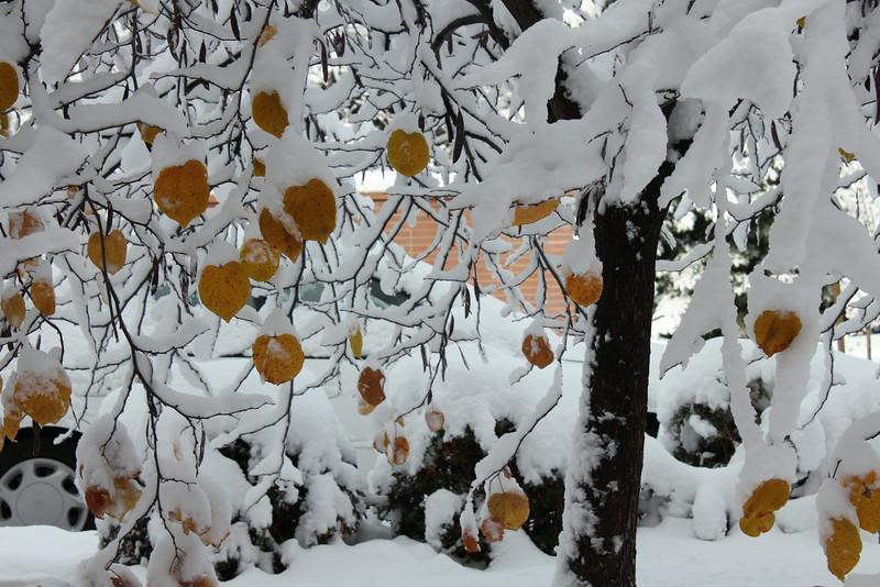 Snowy_Morning_11_10_2012_3305.JPG
