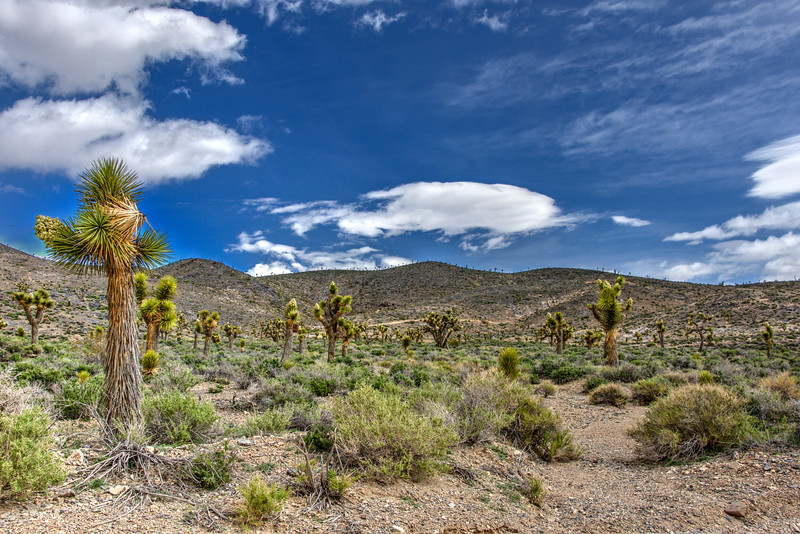 Joshua-trees-cabin-Death-Valley-Beechnut-Photos-rjduff.jpg