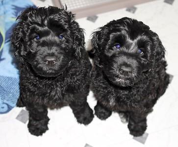 Rainha's puppies