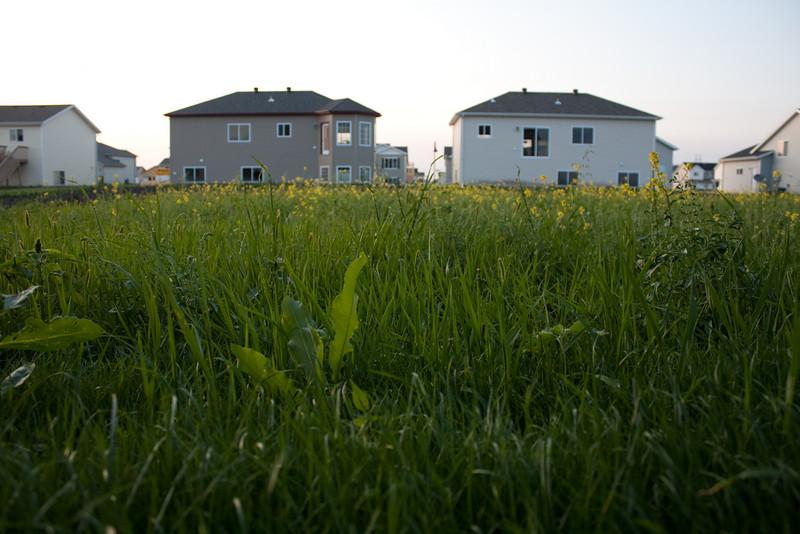 Grass, then weeds
