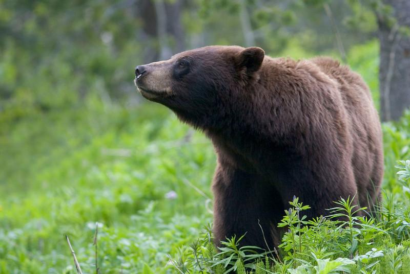 black bear013.jpg