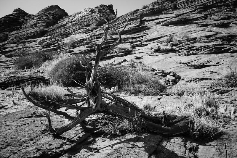 AlikGriffin-Sony-Zeiss-35mm-TheWave-Tree.jpg