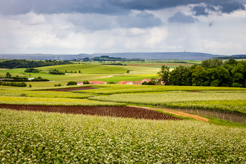 views of France's champagne country