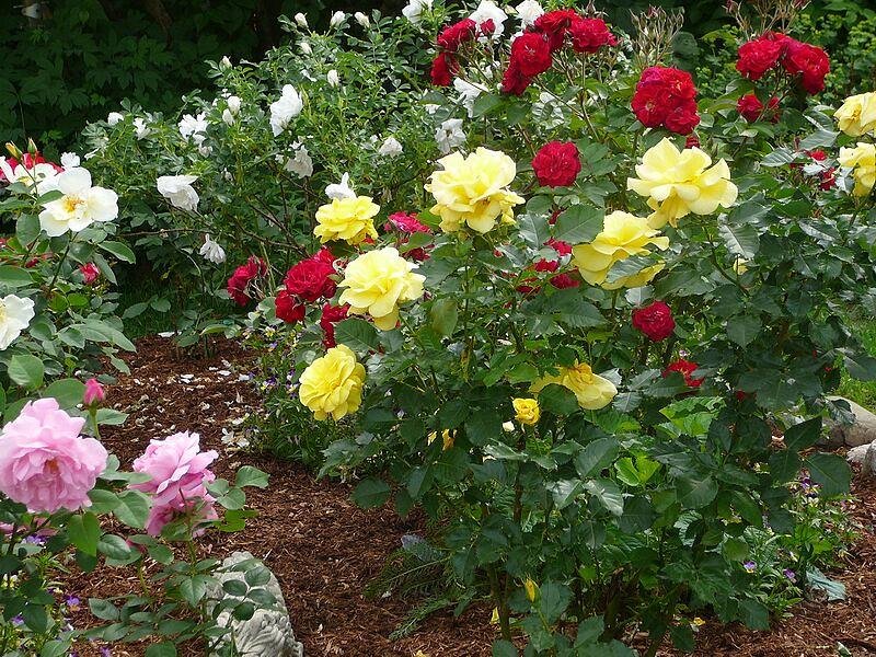 garden-2009-06-0741_std.jpg