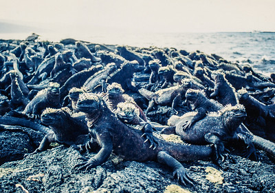 Galapagos Islands, May 17 - June 3, 1993