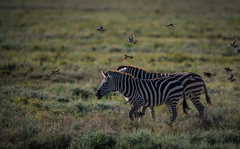 Tanzania_Feb_2018-430-2.jpg
