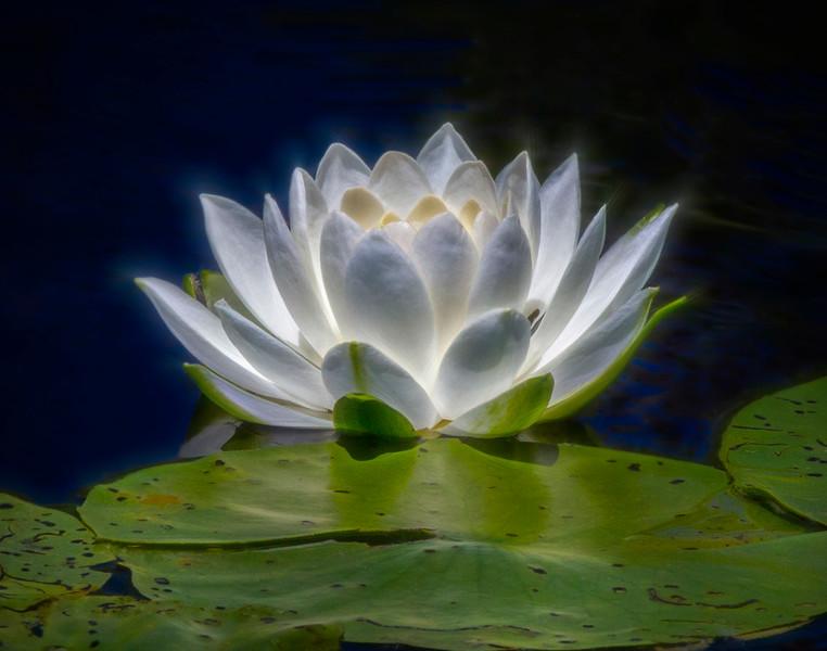 flower smug.jpg