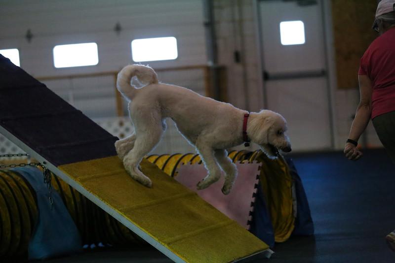 dogs_06142016-12.jpg