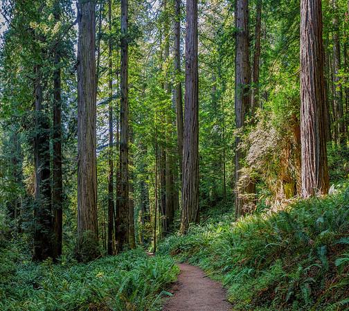 Prairie Creek Trail