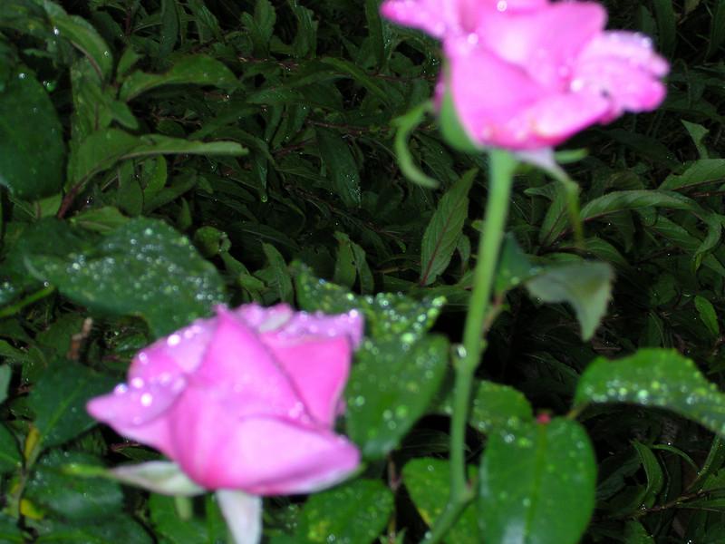 flowers69.JPG