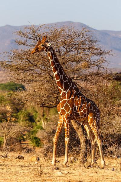 Kenya 2015-01451.jpg