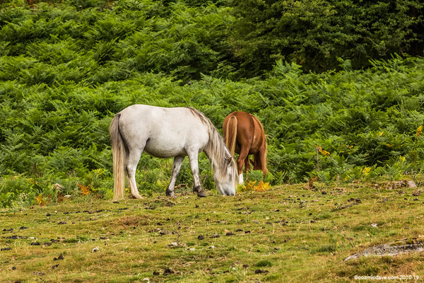 Wild Horses at The Blorenge