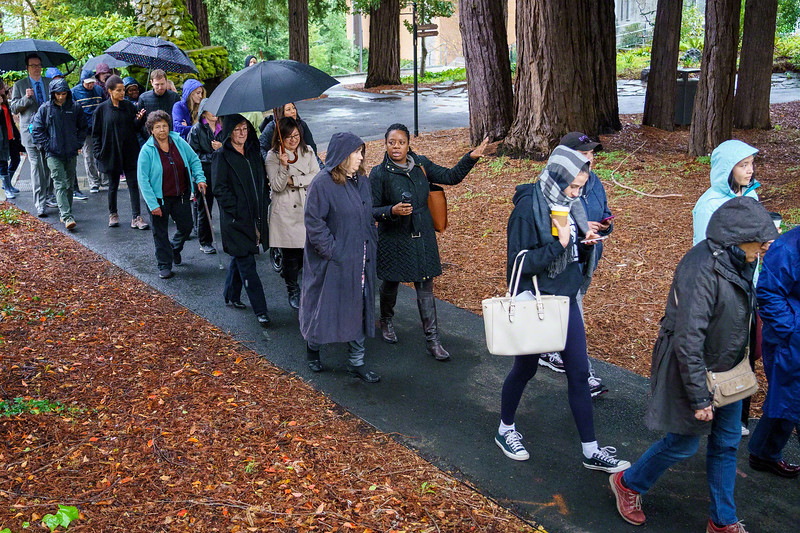 Protest Among the Redwoods