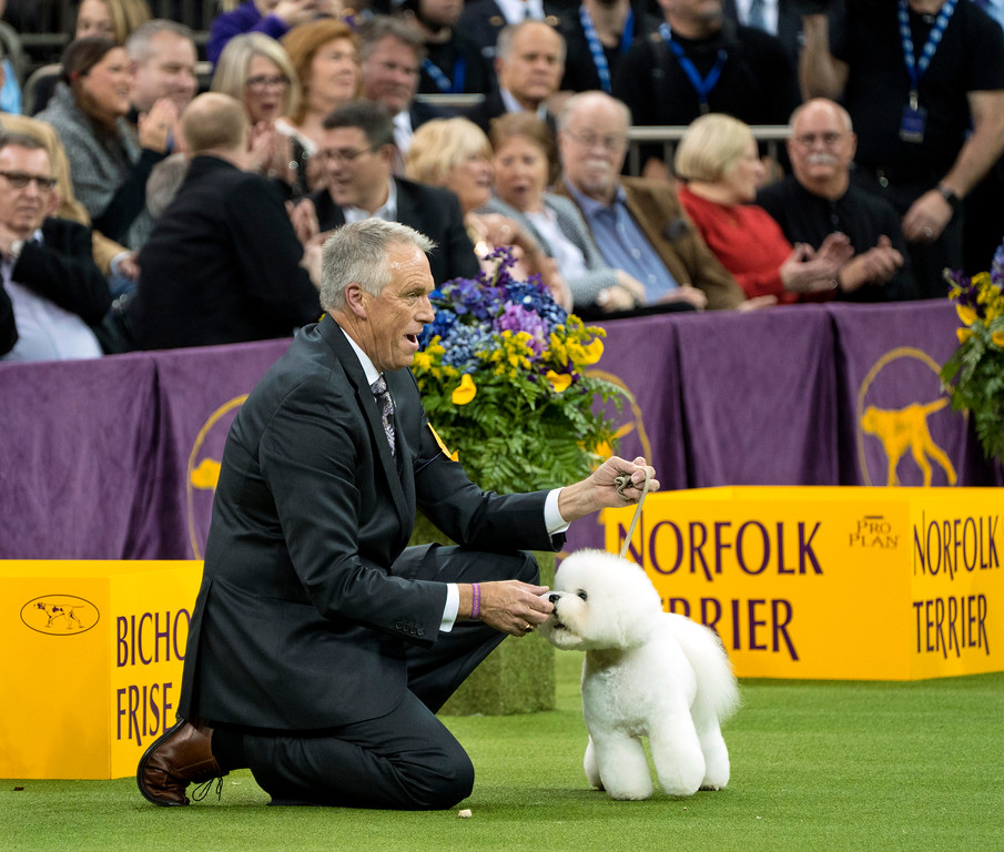 . Handler Bill McFadden reacts as Flynn, a bichon frise, is named Best in Show at the 142nd Westminster Kennel Club Dog Show, Tuesday, Feb. 13, 2018, at Madison Square Garden in New York. (AP Photo/Craig Ruttle)