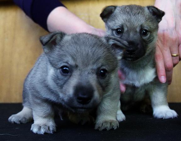 2010-10-10 Pups 4,5 week