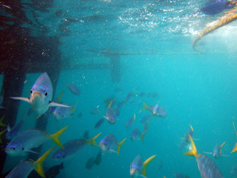 Schools of fish seem to hover permanently below the pontoon.
