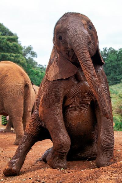 Aug3120x13_nairobi_blixen_elephant_2349.jpg
