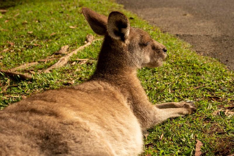 Australia_179.jpg