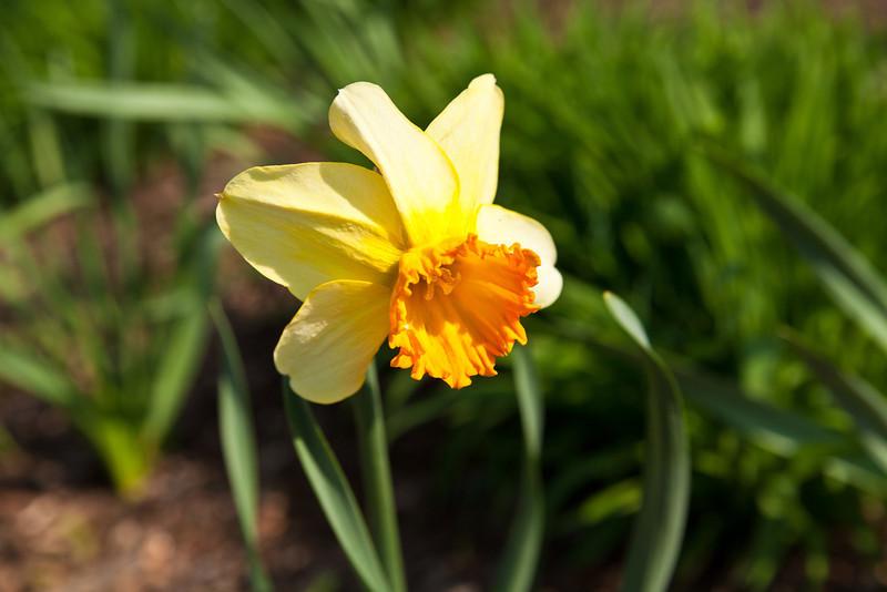 SpringFlowers-6.jpg