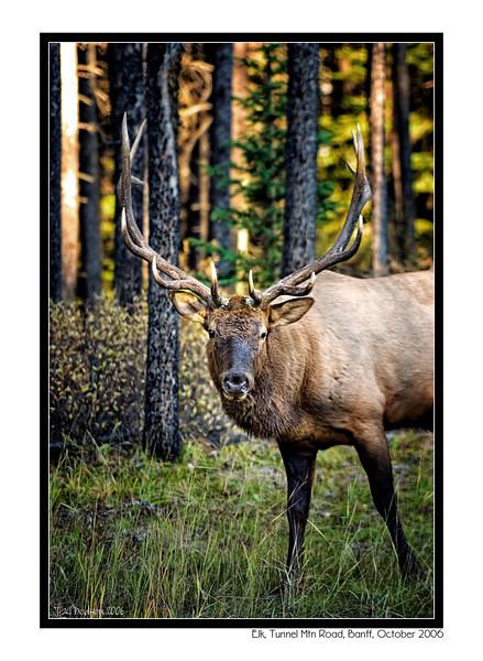 Alberta Canada 2006