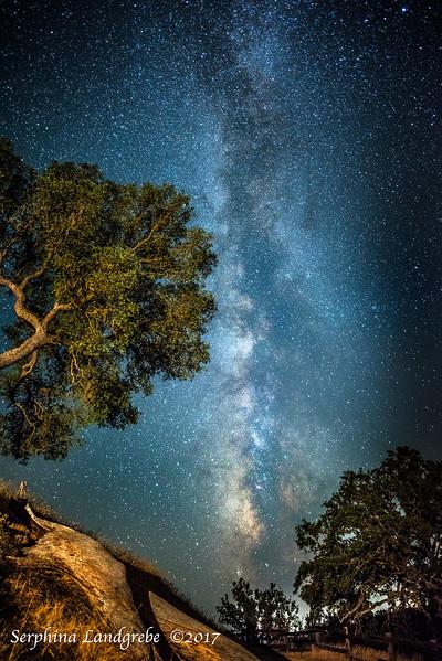 _DSC3005Oak Trees b.jpg