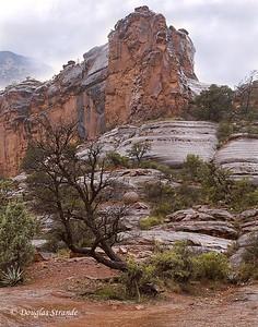 Sedona, Arizona,  2005