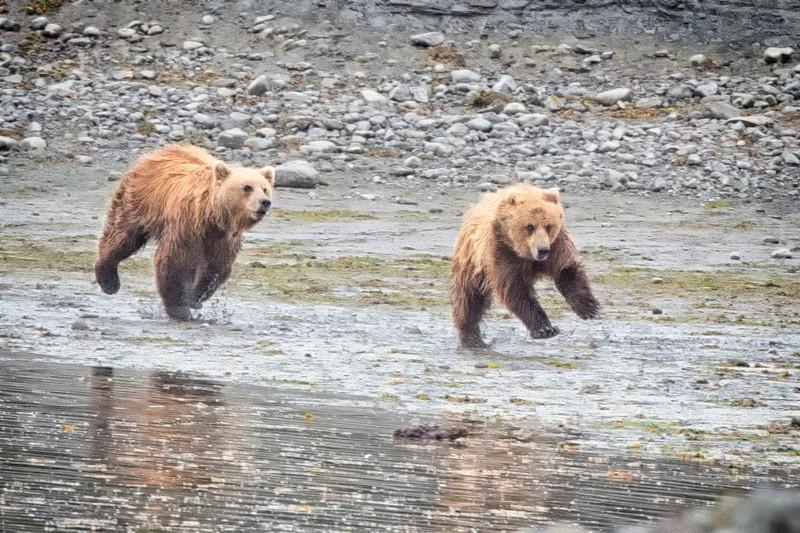 Alaska_FH0T4292.jpg