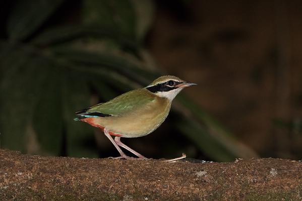 India Birds 2015