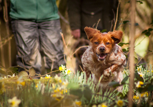 Dog Photography