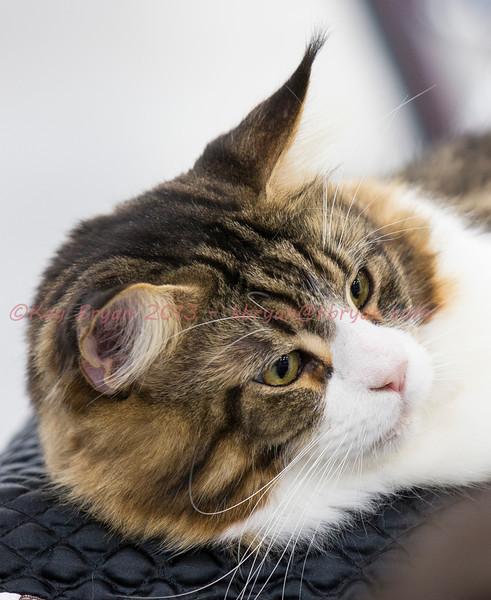 CatShow2014014_1.jpg