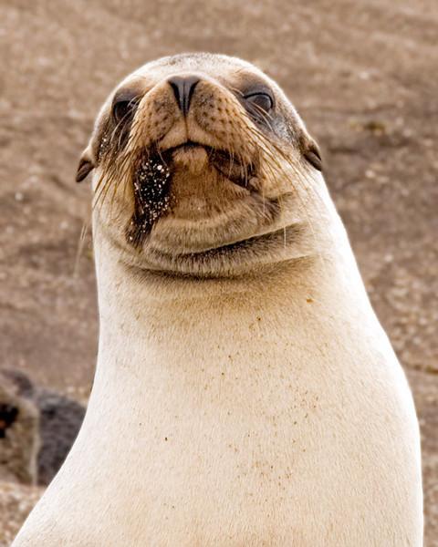 sealhead2-(4).jpg