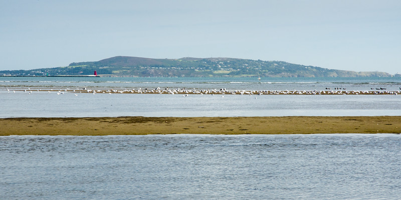 Birds in Dublin Bay