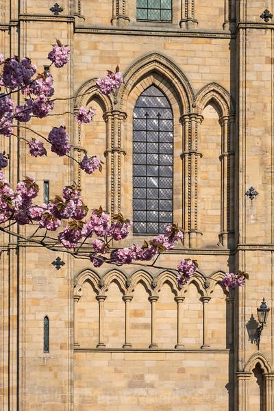 Ripon Cathedral & cherry blossom-51.jpg