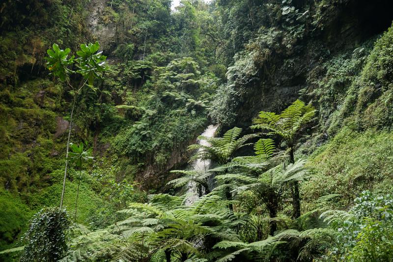 Nyugwe-Rwanda-48.jpg