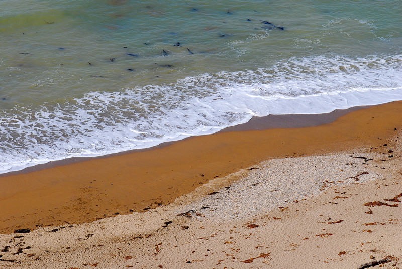 dogs_beach-001.jpg