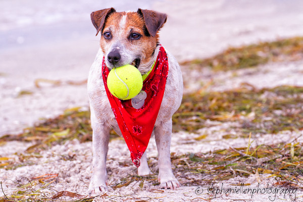 20140706dog_beach_pet_photography_Tampa_Stephaniellenphotography.com-_MG_0204-Edit.jpg