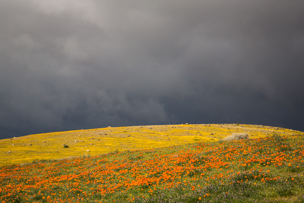 March 27 - California flowers and sky, near Lancaster.jpg