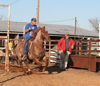 Roan Roping Horse