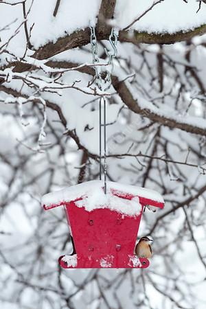 26602 Winter Scenes