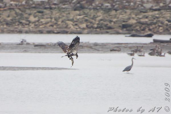 2009-10-29 Riverlands Migratory Bird Sanctuary