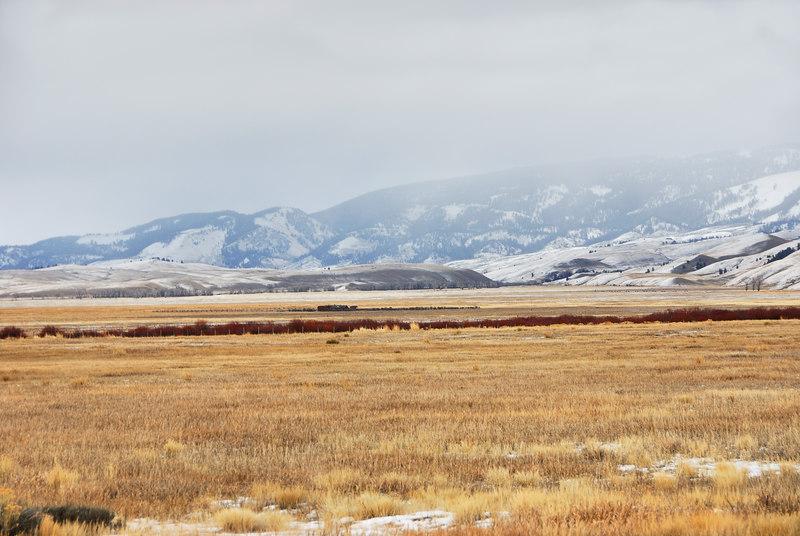 National Elk Refuge   (Dec 12, 2006, 02:23pm)