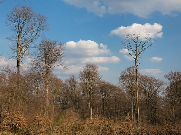 Dans le bois de Hampteau