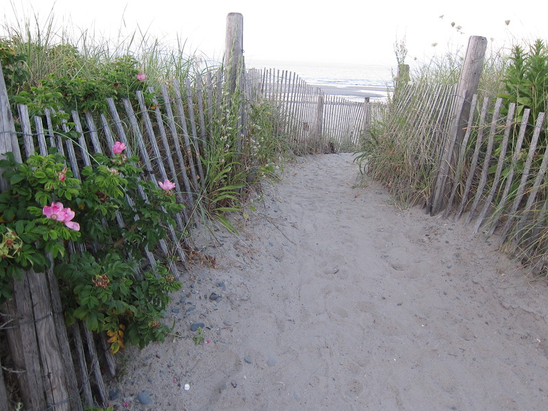 A beach bordered by a vine covered fence that you'll see when you visit Hull, Massachusetts.