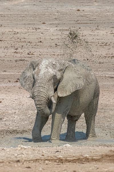 Namibia 69A8521.jpg