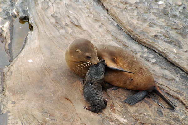 Seals and Sea-lions