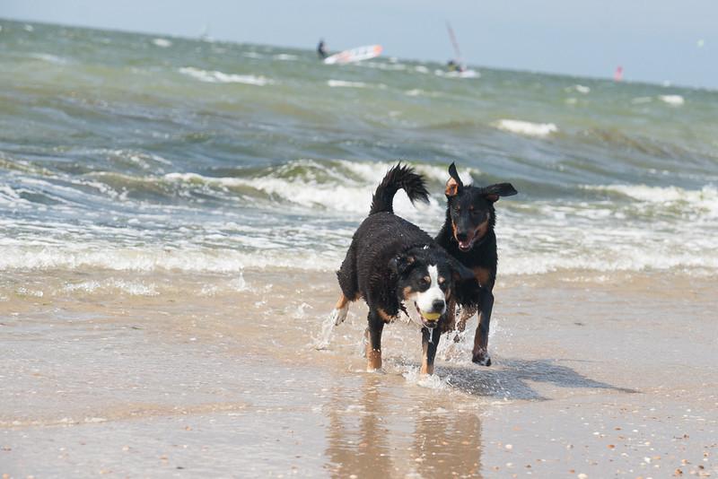 honden-05622.jpg