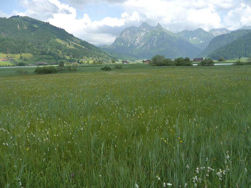 @RobAng 2013 / Velokurztour um den Sihlsee / Euthal, Euthal, Kanton Schwyz, CHE, Schweiz, 889 m ü/M, 2013/07/06 16:12:39
