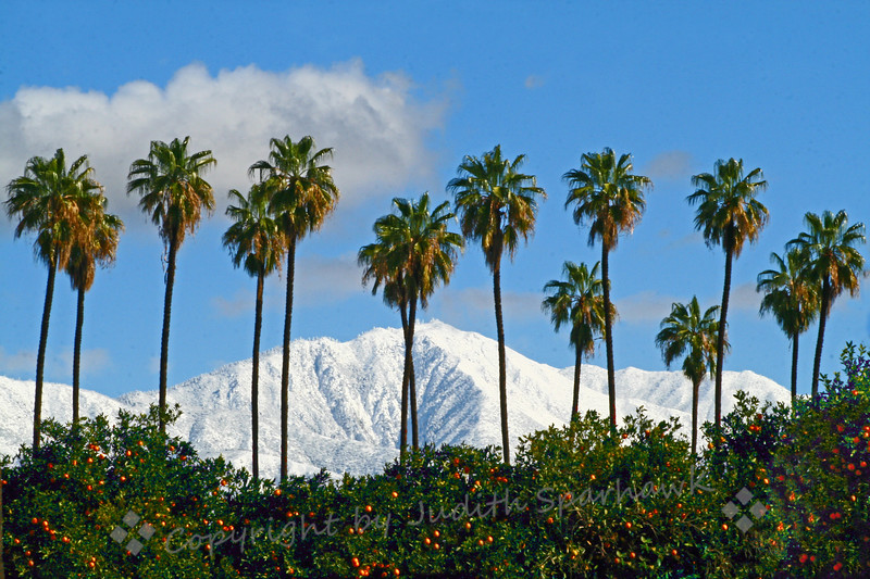 Snowy Redlands ~