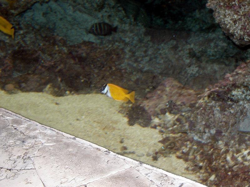 44.  Sydney Aquarium.JPG