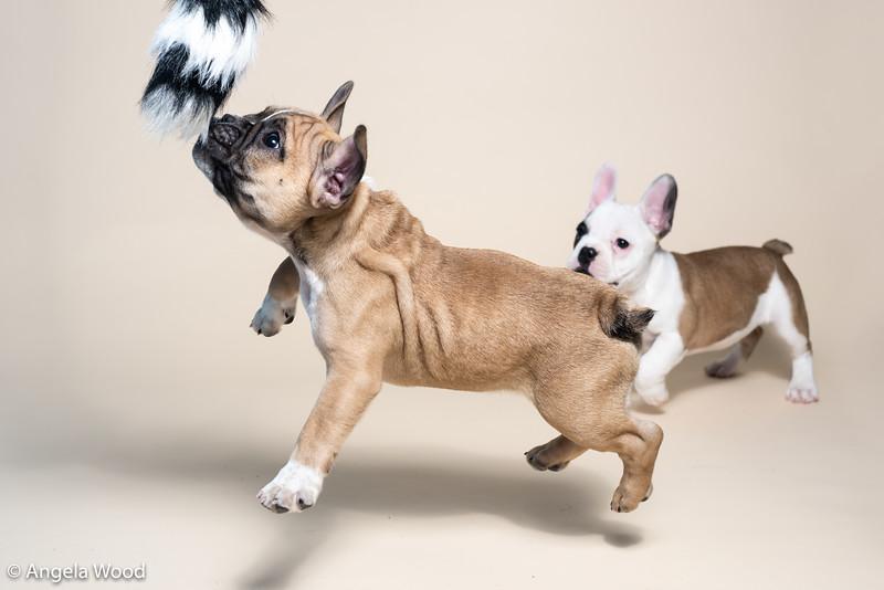 Puppies72.jpg
